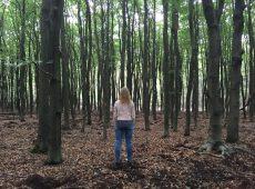 door de bomen het bos niet zien